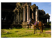 A decorated horse waits for tourists at Angkor Wat in Siem Reap, Cambodia.