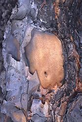 Burned Tree Bark