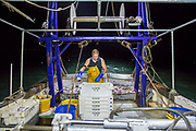 Once sorted the fish are gutted and boxed with ice to keep fresh and ready for market . Luke is a Folkestone based fisherman out trawling for a 12 hour night solo shift on a fishing trip in his boat Valentine FE20, Hythe Bay, the English Channel, United Kingdom.