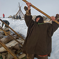 After a day of sledding north of the Arctic Circle in Russia, a nomadic group of Komi reindeer herders assembles its chums (tepees) around their pre-placed belongings.  Pictured here is 72-year old Marie Vaucheskaya, one of the clan's last remaining matriarchs.
