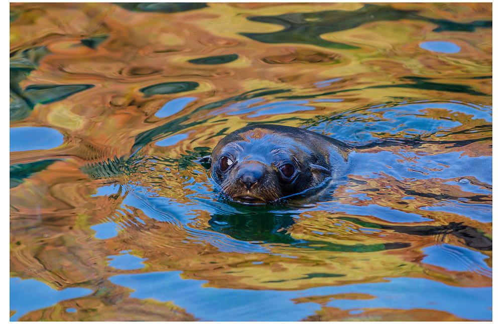Cape Palliser Seal Colony, Wairarapa.