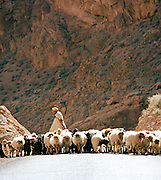 A farmer and shepard with a herd of sheep travel down a road near the Todra Gorge, Morocco