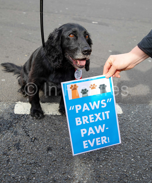 A dog sits in fron of a placard reading Paws Brexit Paw-Ever shortly before joining pet owners to take part in an anti Brexit Wooferendum rally on October 07, 2018 in London, England to protest against Britain leaving the European Union.