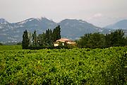 vineyard les dentelles de montmirail le cellier des princes chateauneuf du pape rhone france