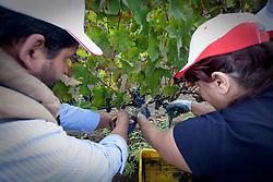 Aglianico del Vulture d.o.c. - Vendemmia 2010 presso l'Azienda Agricola Sant'Agata a Rapolla (PZ)