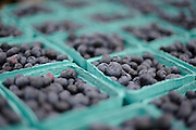 Blueberries at the New York City Hall Farmers Market