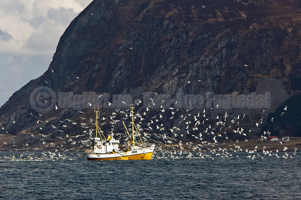 Fiskebåt på vei hjem med full last