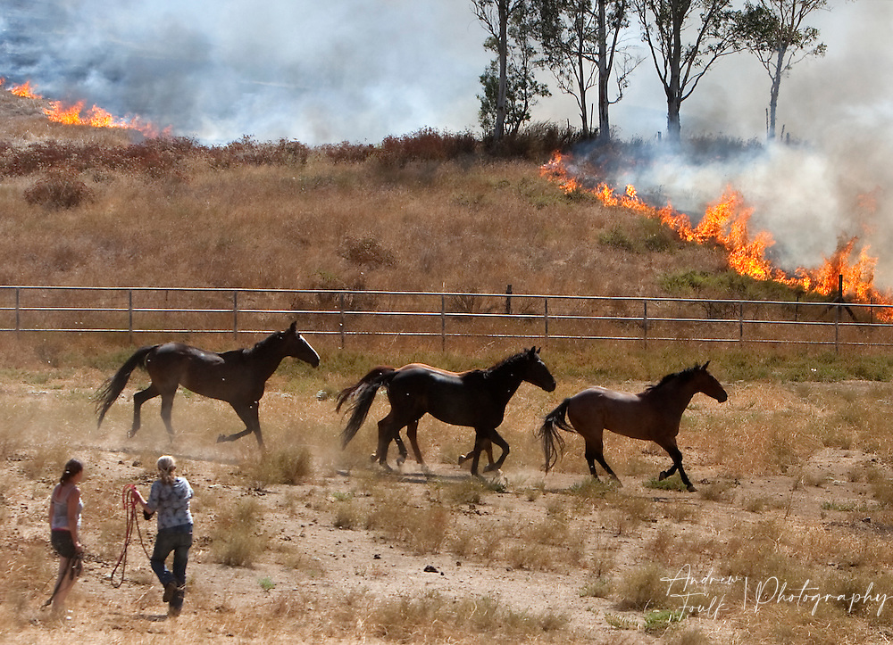 /Andrew Foulk/ For The Californian/ .People try and rescue horses from a pen at the Menifee Meadows Equestrian Center off of Briggs road in Menifee as flames ingulf brush and trees.