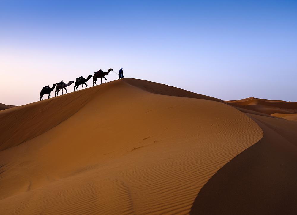 MEKNES - TAFILALET, MOROCCO - CIRCA APRIL 2017: Berber with camels in the dunes of the Moroccan Sahara Desert