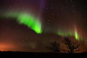Northern lights (Aurora borealis) and bur oak trees<br /> Birds Hill Provincial Park<br /> Manitoba<br /> Canada