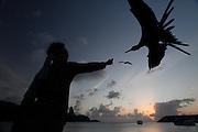 Fernando de Noronha_PE, Brasil.<br /> <br /> Imagens do Parque Nacional Marinho de Fernando de Noronha, Pernambuco. Fragata ou Tesourao (Fregata magnificens) sendo alimentada por turista na Baia de Santo Antonio.<br /> <br /> Fernando de Noronha Marine National Park in Pernambuco. The magnificent frigatebird (Fregata magnificens) being fed by fisherman in Baia de Santo Antonio<br /> <br /> Foto: JOAO MARCOS ROSA / NITRO