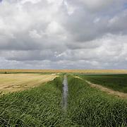Nederland Walsoorden   gemeente Hulst  19 juni 2010 20100619       ..Serie landschappen provincie Zeeland. Zeeuws-Vlaanderen, landschap polderlandschap scenery met op de achtergrond de dijk van de westerschelde.   wisselvallig veranderlijk weer. Op de voorgrond een watergang met rietkraag, riet. Illustratief beeld  waterveiligheid, hollandse landschappen en luchten. , skies, sloot, space, sprankelend, sprankelende, stijging zeespiegel, stil, stilleven, stilte, stock, stockbeeld, streek, sunny, sustainable, terrein, typerend, typical dutch landscape, typisch hollands, typisch hollands landschap, typische, uitgestrektheid, uitzicht, uniek, unieke, veiligheid, veld, vergezicht, vergezichten, verte, vrij, vrijheid weer, waaien, water level, waterbeheer, Waterbeheerplan, watergang, waterhuishouding, waterkering, Waterkeringen, waterkeringen, waterlevel, watermanagement, waterniveau, waterpeil, waterplan, waterproblematiek, waterstaatkundige, waterstand, watersysteem, waterveiligheid, waterveiligheid en gebiedsontwikkeling, waterwerken, weersomstandigheden, wei, weide, weidegang, weiland, weiland. Landscape, wijdheid, wijds, wijdsheid, wind, wit, witte, wolk, wolken, wolkenpartij, zeeland, zeeuws vlaanderen, zeeuws-vlaanderen, zeewering, zo vrij als een vogel, zonnig, zonnige dag, zware, zwitserleven gevoel   ..Foto: David Rozing