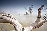 Fog on boneyard beach at Botany Bay in Edisto Island, South Carolina. Rising tides along the coastline are eroding the beach slowly submerging the forest.