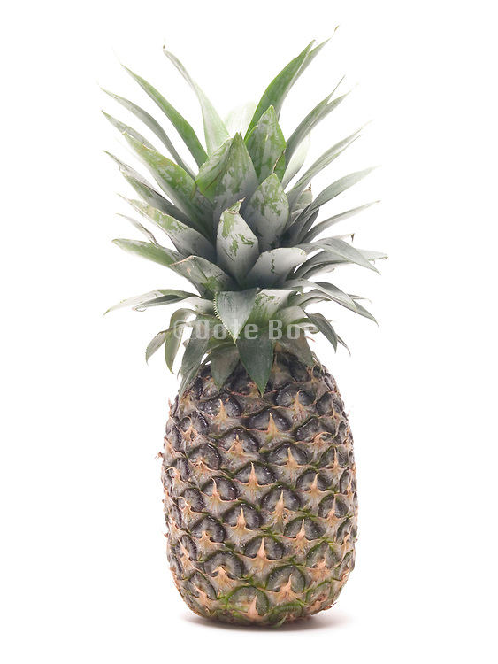 still life of a pineapple