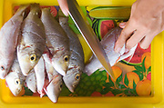Freshly caught local fish on a brightly coloured tray being prepared for a barbeque on Koh Lanta.