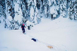 United States, Washington, Crystal Mountain. Snow-covered trees and woman on snowshoes with dogs.