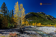 Autumn color along the Teton River and Cave Mountain  in the Lewis and Clark National Forest, Montana, USA