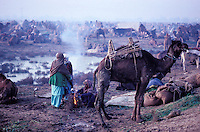 Pakistan, Balouchistan, Sibi, Foire aux chameaux annuelle // Pakistan, Balouchistan, annual camel fair of Sibi