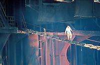 Pakistan, Province du Balouchistan, Gadani Beach, Travaillant souvent au peril de leur vie, des milliers de manoeuvres demantelent chaque jour, quasiment a mains nues, des dizaines de petroliers et cargos uses d'avoir sillonnes les mers. // Pakistan, Balouchistan Province, Gadani beach,  Cuting boat,  Cargo and oil tanker cimetery, A mass of men, armed with little more than hand tools, descend on the vessel and over the next few weeks will break it down to the last rivet. It's dirty and dangerous work but this is one of the world's biggest ship scrapyard and a spectacular sight.