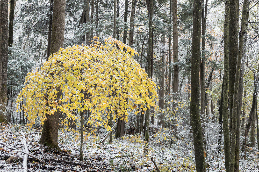 Autumn color and snow, Clarks Creek, Cherokee National Forest