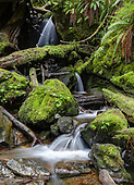 Hon Rainforest at Olympic National Park