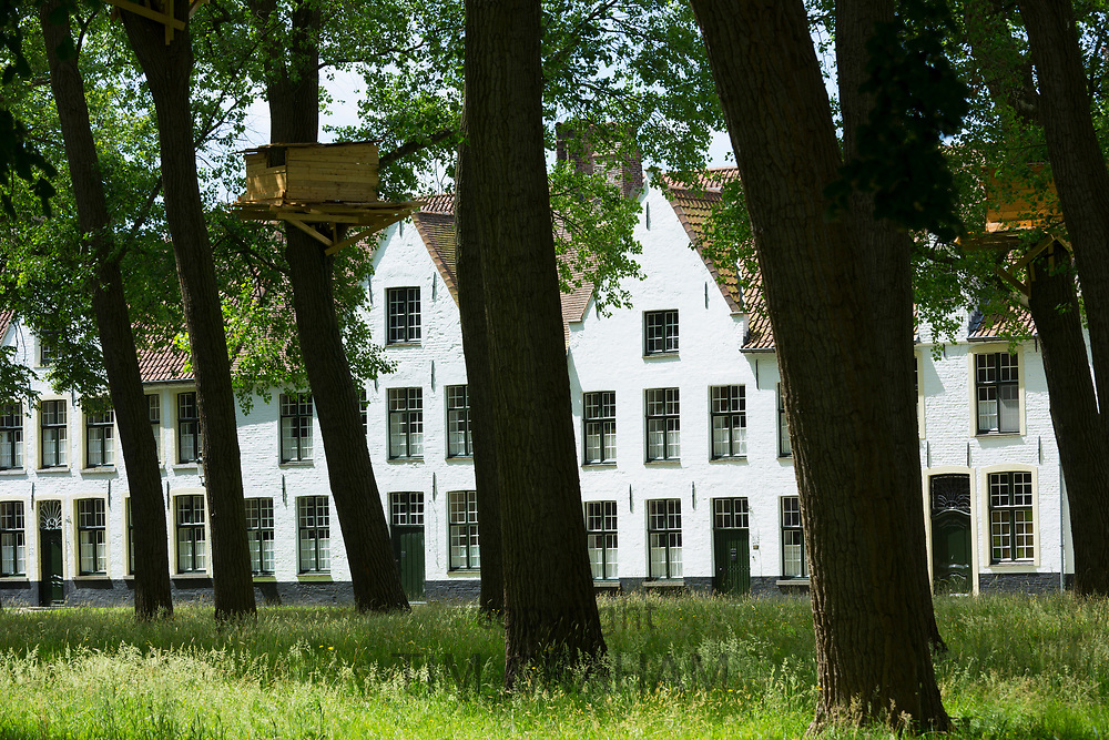 Tall trees and tree hut by Tadashi Kawamata at Beguinage convent - Begijnhof Benedictine monastery for nuns in Bruges, Belgium