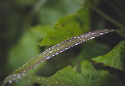 THEMENBILD - Wassertropfen auf einem Grashalm, aufgenommen am 10. August 2018, Kaprun, Österreich // Drops of water on a blade of grass on 2018/08/10, Kaprun, Austria. EXPA Pictures © 2018, PhotoCredit: EXPA/ Stefanie Oberhauser