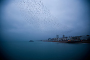 Limited Edition of 17<br /> Brighton England Bird Swam from Pier
