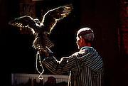 MOROCCO, MARRAKECH Medina; bird trainer with falcon