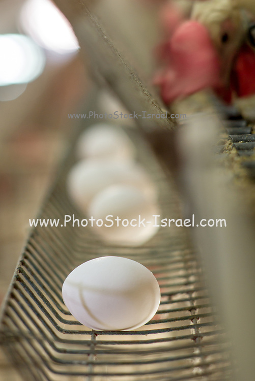 Egg farming. Hens in a battery Photographed in Israel