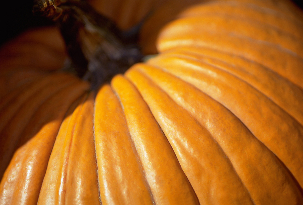 Close up detail photograph of the side of a pumpkin in the sunlight
