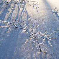 Snow & ice cling to bare tree branches in the Alaskan winter.