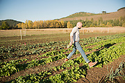 Chef Timothy Watsell jumps the turnip row at Adaptive Seeds farm in Sweet Home, OR.