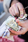 Fresh lowcountry oysters during Cook it Raw outdoor BBQ event on Bowen's Island October 26, 2013 in Charleston, SC.