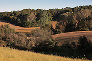 This image is an early autumn view of Iowa's rolling hills and picturesque fields as the harvest season approaches. The photograph was taken on an early September morning.