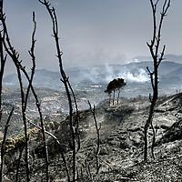 Griekenland.Peloponnesos.28 augustus 2007..Verschroeide aarde als gevolg van de bosbranden in de Peleponesos zo'n 40 km buiten Olympia..