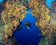 Coral reef, Underwater Arches in Cozumel, MX