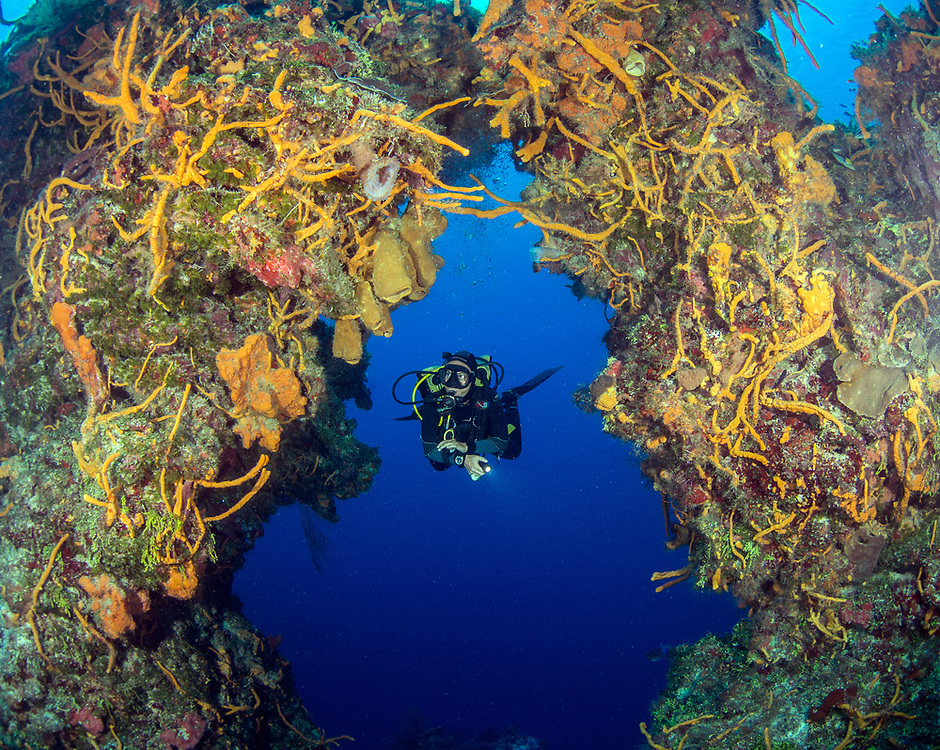 Coral and sponges  formed an underwater arches in Cozumel, Mexico
