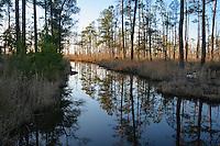 Trees reflecting on water, Blackwater National Wildlife Refuge, Cambridge, Maryland, USA.