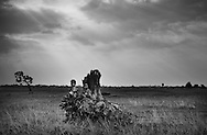 Two Cambodian boys sit on a large tree stump in the middle of a vast meadow in Siem Reap, Cambodia, Southeast Asia. Sun rays filter through the clouds.