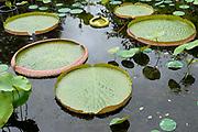 De Hortus Botanicus Amsterdam is een botanische tuin. De tuin ligt aan de Plantage Middenlaan, in de Plantagebuurt. De tuin is ongeveer 1,2 ha groot en bevat meer dan zesduizend tropische en inheemse bomen en planten. <br /> <br /> The Hortus Botanicus Amsterdam is a botanical garden. The garden is located at the Plantage Middenlaan, in the Plantagebuurt. The garden is about 1.2 hectares and contains more than six thousand tropical and indigenous trees and plants.