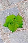 Vine leaf. Domaine Gerovassiliou, Epanomi, Macedonia, Greece.