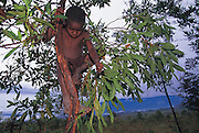 A Dani child hunts for stink bugs that will be roasted later for a tasty morning snack, Soroba, Baliem Valley, Irian Jaya, Indonesia. Man Eating Bugs page 78, top.