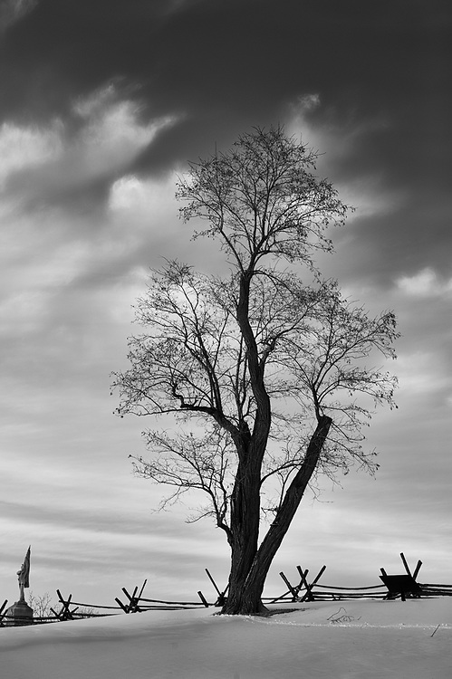 A lone leafless tree is seen in winter along a sunken road that came to be called Bloody Lane, which played a central role in the second phase of the battle of Antietam in September 1862 as part of the American Civil War.