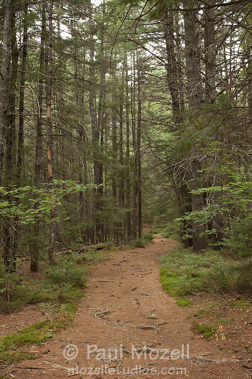 The Oliverian Brook Trail in the White Mountain National Forest is a popular hiking and cross country skiing trail