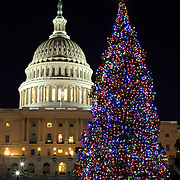 The Capitol Christmas Tree, or the People's Tree as it is commonly called, graces the West Lawn of the U.S. Capitol.