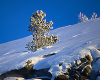 Frosty Tree Near Kirkenes Norway. Image taken with a Nikon D800 and 180 mm f/2.8D lens (ISO 100, 180 mm, f/3.2, 1/2500 sec)