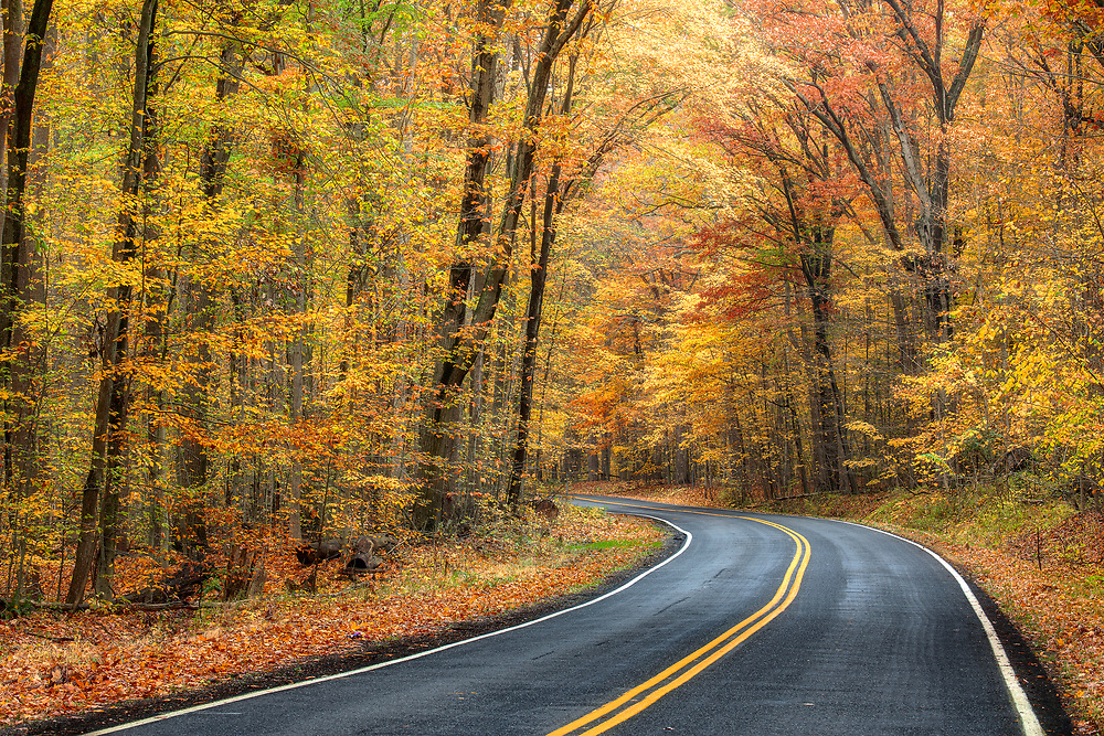 """Autumn Drive <br /> <br /> 18"""" x 12"""" print <br /> <br /> See pricing page for more information.<br /> <br /> Please contact me for custom sizes and print options including canvas wraps, metal prints, assorted paper options, etc. <br /> <br /> I enjoy working with buyers to help them with all their home and commercial wall art needs."""