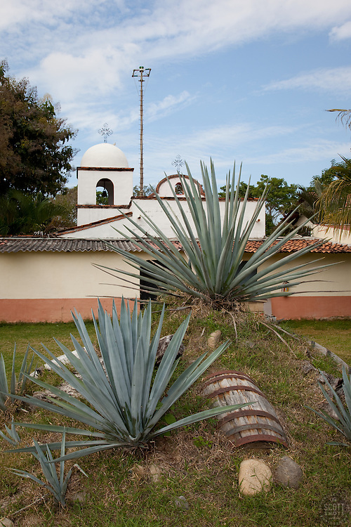 """""""Buried Barrel""""- This buried barrel and agave plants, used in the making of tequila, were photographed near Puerto Vallarta, Mexico."""