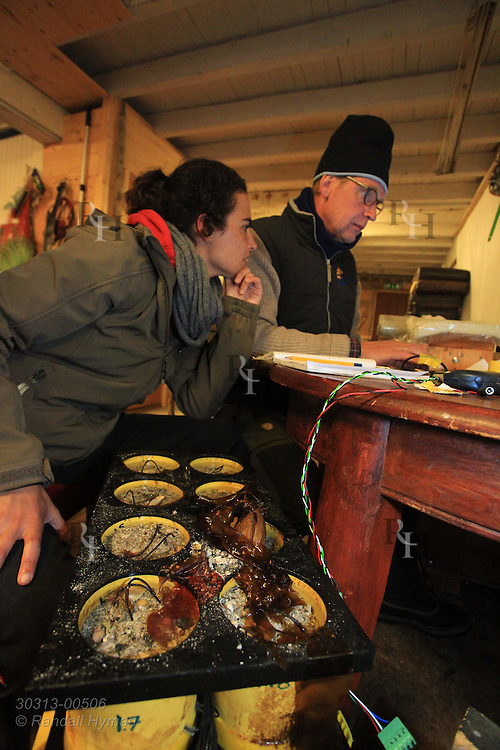 Doctoral student Irene Ballesta Artero and marine ecologist Rob Witbaard enter months of data from clams in containers beside them wired with loggers; Ingoya island, Finnmark, Norway.